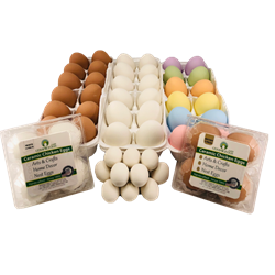 Ceramic Pottery Eggs - Coastal Ag Supply