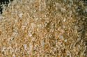 Patterson Mini Flake Wood Shavings - Coastal Ag Supply